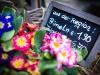 Eselsmuehle-Blumen