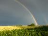 Regenbogen-Fildern